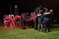 Koně na Nováku